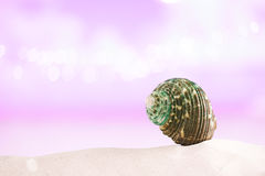 Tropical green sea shell on white sand with festive glitter back Royalty Free Stock Images