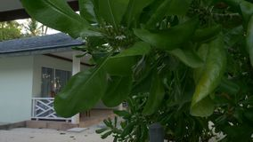 Tropical green tree and beach villa nearby. 4k stock footage