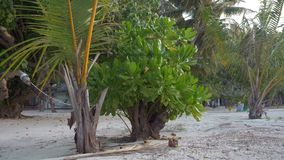 Tropical green tree and beach villa nearby. Maldives. 4k stock video footage