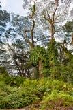 Tropical greenery Stock Image