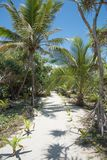 Tropical Greenery on Mystery Island. Mangrove trees and palm trees along sandy path under a clear, sunny sky at Mystery Island, Vanuatu Stock Photography