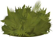 Tropical greenery Stock Images