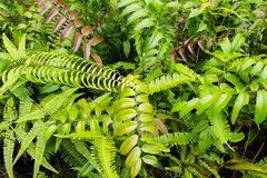 Tropical greenery top view closeup photo. Tropical foliage with green fern leaf. Summer greenery background photo. Exotic plant outdoor in sun. Tropical garden Stock Image