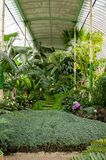 Tropical greenhouse with tropic trees and plants Stock Photo