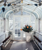 Tropical Greenhouse view. Interior view of a sunny tropical greenhouse showing lush hibiscus plants and bright white steel structure and french doors Royalty Free Stock Photo
