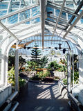 Tropical Greenhouse view. Interior view of a sunny tropical greenhouse showing lush plants and bright white steel structure Stock Images