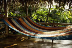 Tropical Hammock Stock Images