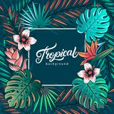 Tropical hand written lettering text Stock Image