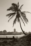 Tropical Havana Skyline Royalty Free Stock Photography