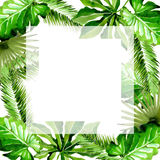Tropical Hawaii leaves palm tree frame in a watercolor style. Aquarelle wild flower for background, texture, wrapper pattern, frame or border Stock Image