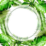 Tropical Hawaii leaves palm tree frame in a watercolor style. Stock Images