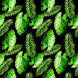 Tropical Hawaii leaves palm tree pattern in a watercolor style. Stock Image