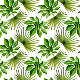 Tropical Hawaii leaves palm tree pattern in a watercolor style. Royalty Free Stock Images
