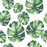 Tropical Hawaii leaves palm tree pattern in a watercolor style isolated. Aquarelle wild flower for background, texture, wrapper pattern, frame or border Stock Photos