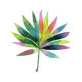 Tropical Hawaii leaves palm tree in a watercolor style isolated. stock illustration