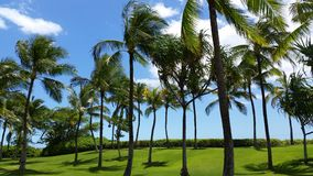 Tropical Hawaiian landscape Stock Photo