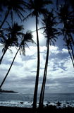 Tropical Hawaiian Shoreline. Palm trees and rocky shoreline are silhouetted in this view of the Kaimu Black Sands Beach on the Big Island of Hawaii Stock Photos