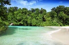Tropical heaven Stock Image