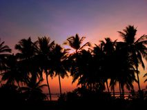 Tropical Heaven. A beautiful background of tropical evening Stock Photography