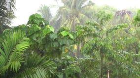 Tropical heavy rain in rainforest. Rainforest. Heavy rain during the rainy season in Asia stock video