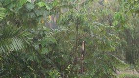Tropical heavy rain in rainforest. Rainforest. Heavy rain during the rainy season in Asia stock video footage