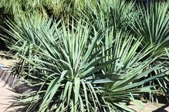 Tropical herb. Green beautiful cute Royalty Free Stock Image