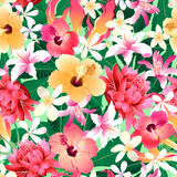 Tropical hibiscus floral 4 seamless pattern Royalty Free Stock Images
