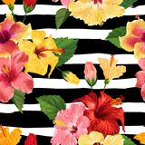 Tropical Hibiscus Flower Seamless Pattern. Floral Summer Background for Fabric Textile, Wallpaper, Decor, Wrapping. Paper. Watercolor Botanical Design. Vector Royalty Free Stock Photo