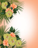 Tropical Hibiscus Flowers border. Image and illustration Composition for Card, luau, wedding invitation, stationery, page, background or border of Tropical Royalty Free Stock Photo