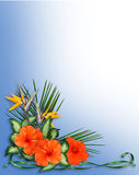 Tropical Hibiscus Flowers border. Image and illustration Composition for Card, luau invitation, stationery, page, background or border of Tropical flowers with Royalty Free Stock Photography