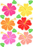 Tropical Hibiscus Flowers/eps Stock Photos