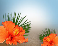 Tropical Hibiscus Flowers on sandy texture Royalty Free Stock Photo
