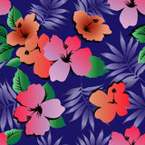 Tropical Hibiscus flowers. Seamless pattern Stock Photos