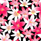 Tropical hibiscus red and pink floral design seamless pattern Stock Photography