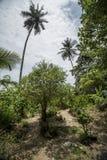 Tropical hills on Penang island. Tropical hills on Penang island, Malaysia Royalty Free Stock Photography