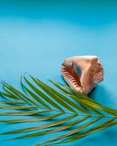 Tropical paradise concept: big tropical shell with a palm tree l. Tropical holiday concept: big tropical shell with a palm tree leaf on a turquoise background Stock Images