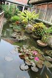 Tropical home lake garden Stock Photos