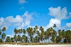 Tropical horizon with palms at the beach. Tropical horizon of brazilian beach Royalty Free Stock Photo