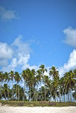 Tropical horizon with palms at the beach. Tropical horizon of a brazilian beach Royalty Free Stock Image
