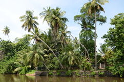Tropical hotel. In Sri Lanka Stock Images