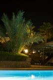 Tropical hotel swimming pool. Illuminated palm trees by side of tropical hotel swimming pool, night scene Royalty Free Stock Image