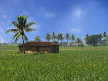 Tropical House. A beautiful farmhouse in the sugarcane fields in the Indian tropics Royalty Free Stock Photos