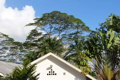 Tropical house in the jungle stock images