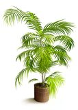 Tropical House Plant in 3D Royalty Free Stock Photos
