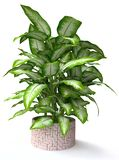 Tropical Houseplant Stock Photo
