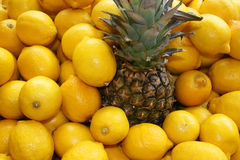 Tropical hug... Lemons around pineapple,close up Stock Image