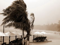 Free Tropical Hurricane, Resort, Palms. Royalty Free Stock Photos - 5169438