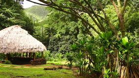 Tropical Hut Gathering Spot Hawaiian Island. A hut or shack in the hillside forest stock footage