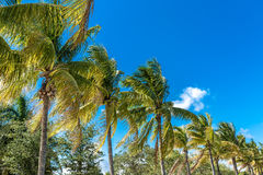 Tropical image with palm trees in the blue sunny sky Royalty Free Stock Photos