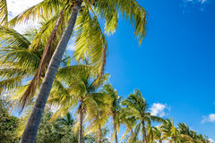 Tropical image with palm trees in the blue sunny sky Stock Photo
